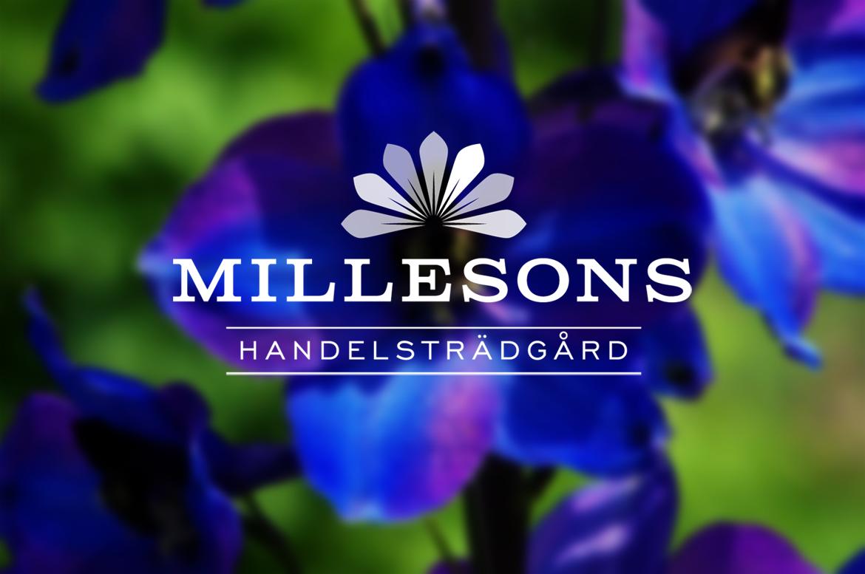 Mill_teaser